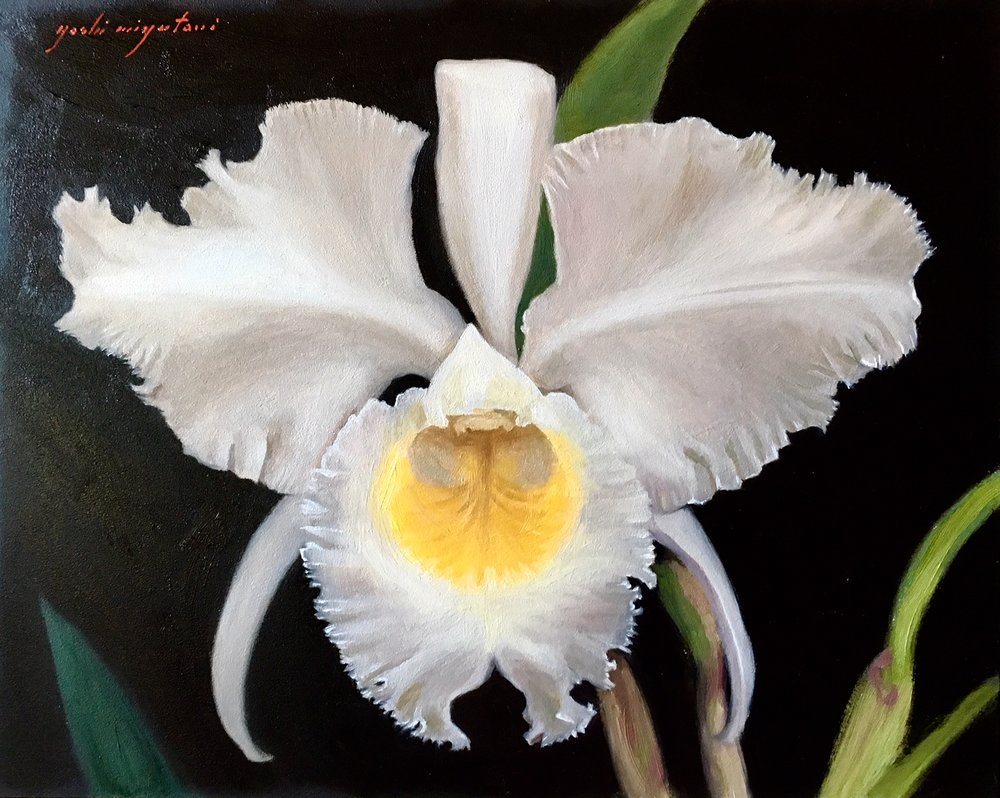 Yoshi Mizutani  (2017) White and Yellow Cattleya Orchid