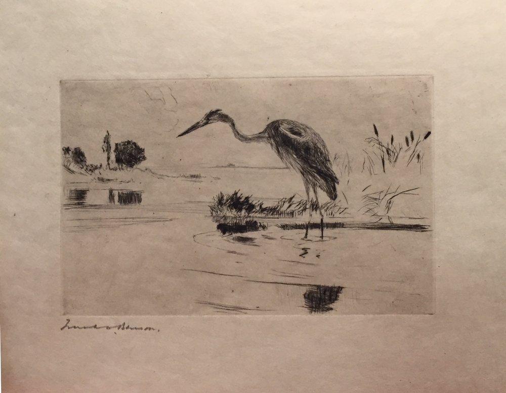 Heron Fishing