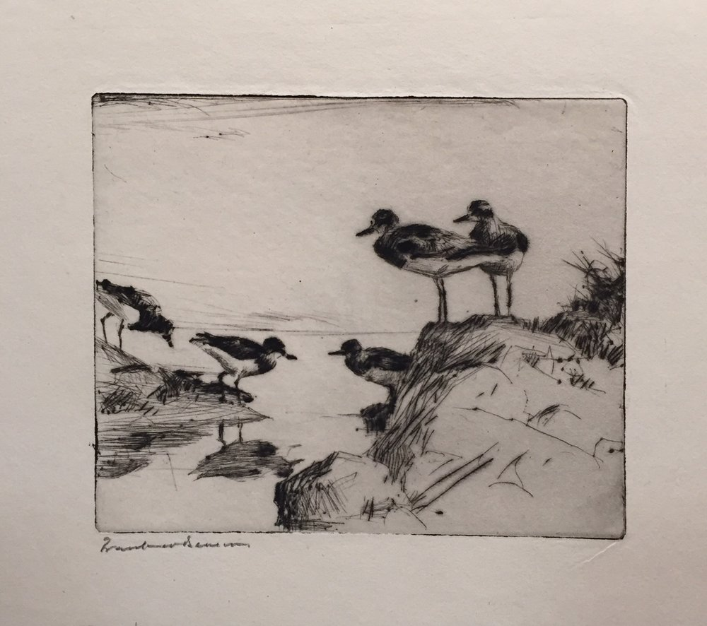 Study of Turnstones