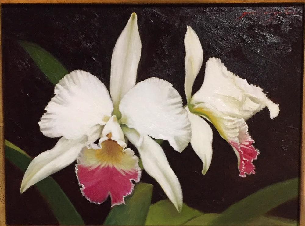 Pink Cattleya Orchid