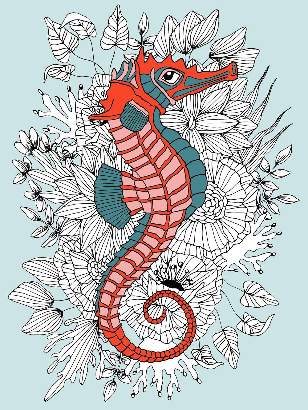 Seahorse_color.jpg