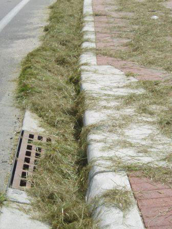 These grass clippings are clogging a storm drain and should be blown off the road.