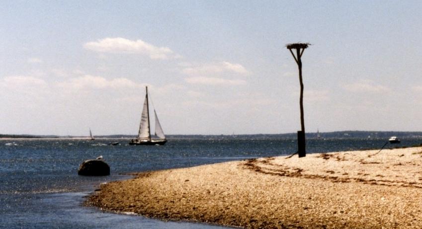 sailboatospreysouthferry6x8.JPG