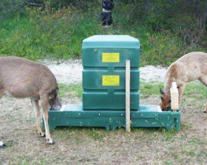 deerfeeding2.jpg