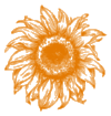 A Shift Happens Sunflower - Orange@0.5x.png