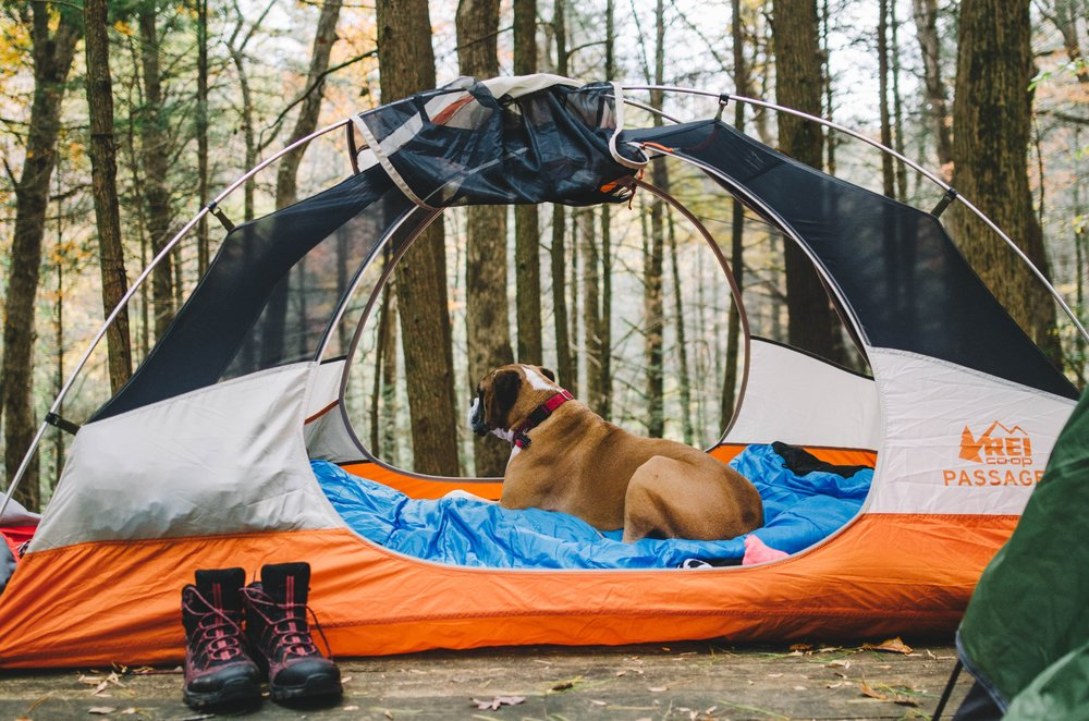 Rocko hanging out in our new Passage 2 tent.