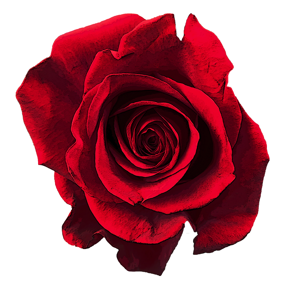 Rose-Stylized.png