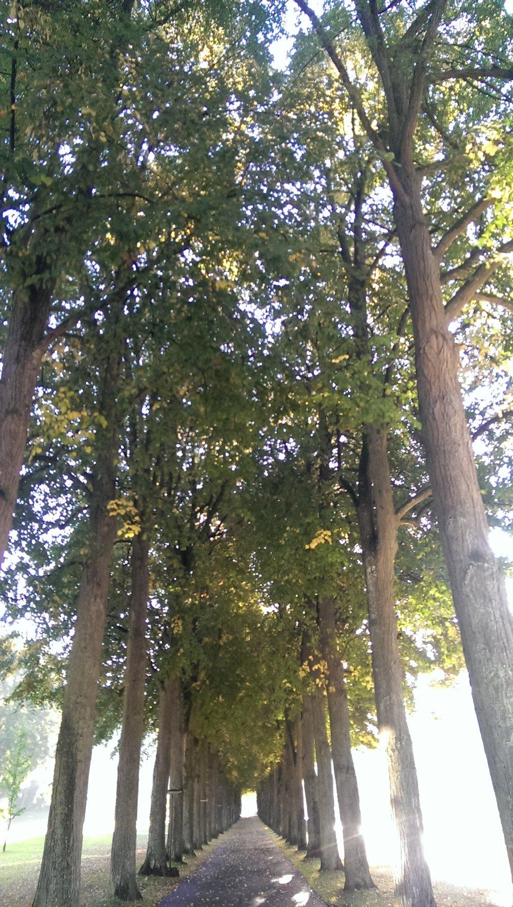 Walk in Kurpark