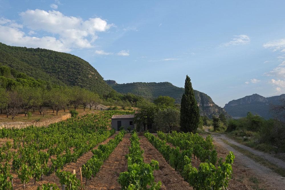 - Le domaine est certifié en agriculture biologique et en voie d'obtention du label en biodynamie Biodyvin. L'altitude, les sols argilo-calcaire profonds et drainants, le climat frais de ces vallées ; toutes les conditions sont réunies pour produire des vins d'une fraicheur et d'une tension fruitée très spécifique à ce terroir.Nous travaillons exclusivement les cépages méridionaux : grenache et carignan pour la majorité de nos assemblages, syrah et cinsault. Pour les blancs, les vieilles vignes de carignan blanc et de terret bourret sont associées au grenache blanc et gris.