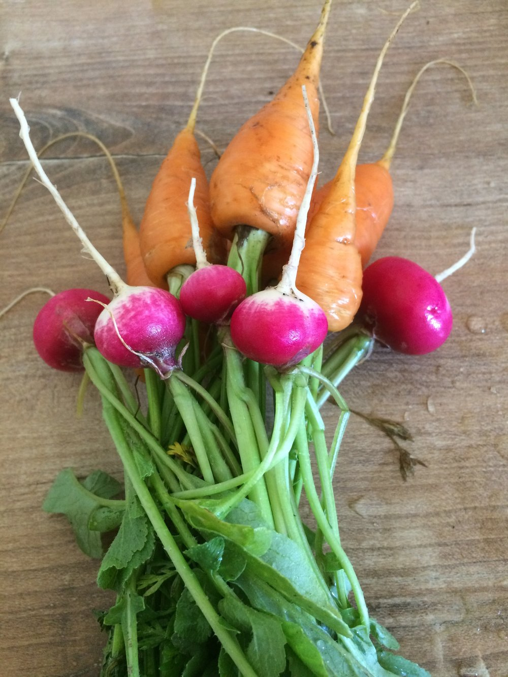 carotte et radis.JPG