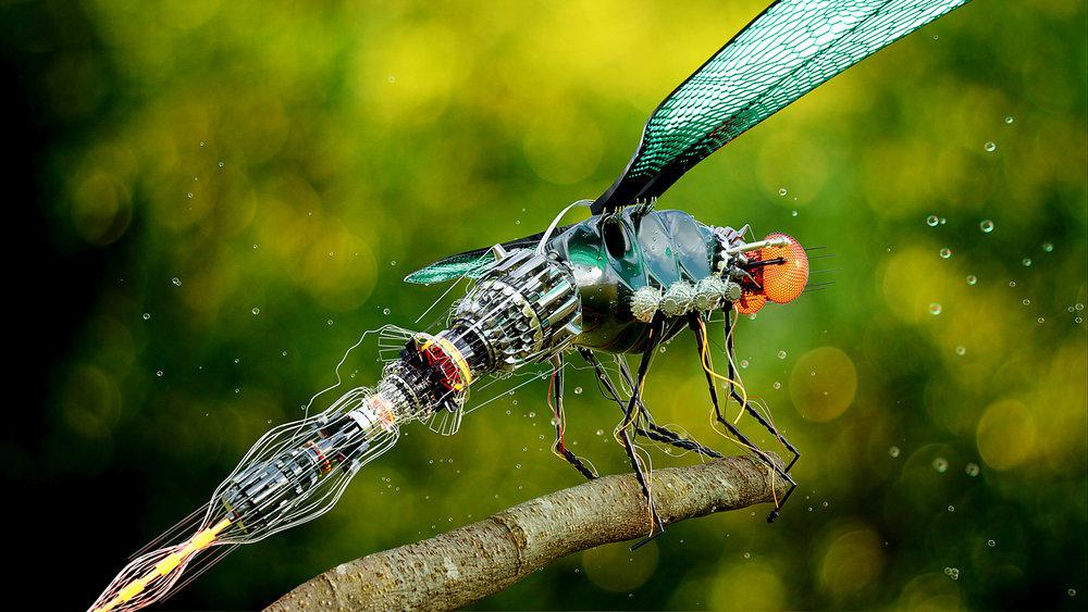 ALTSHIFT_Dragonfly_01.jpg
