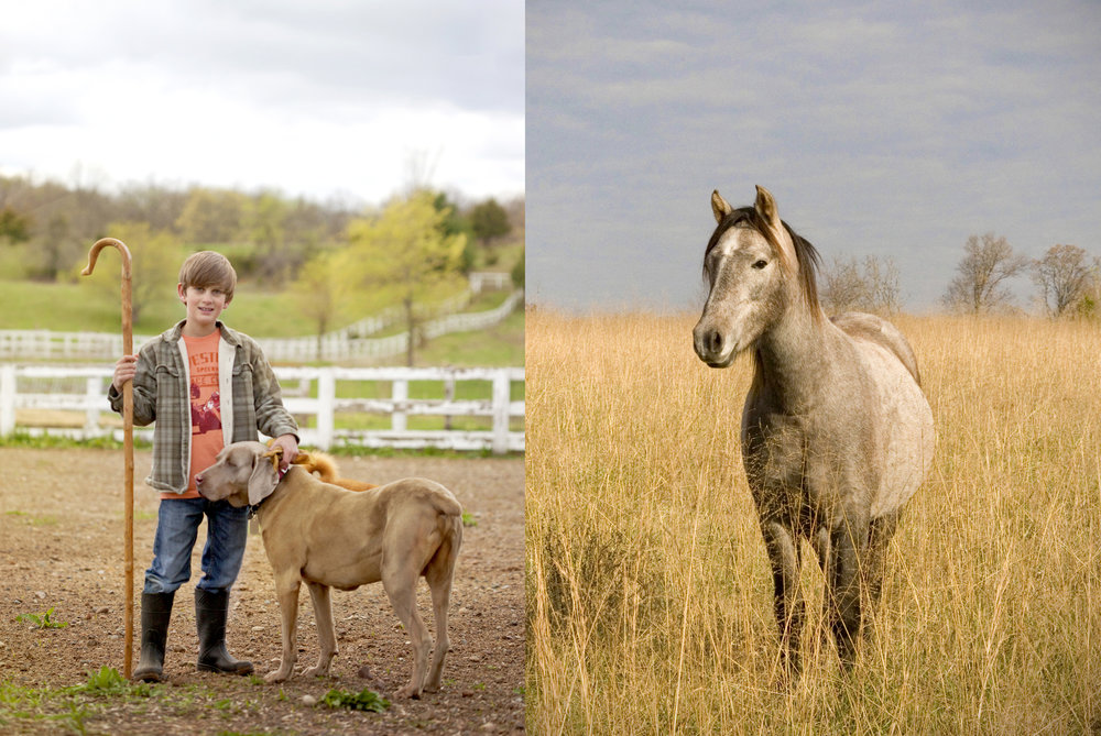 farm photography of boy sheepherder, dog and horse