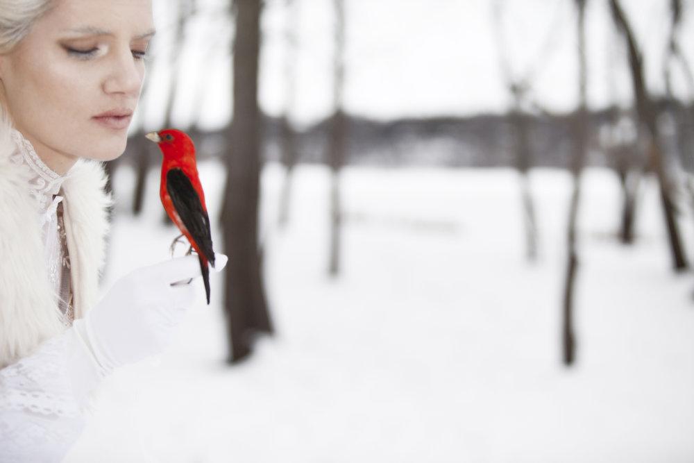 fashion photography winter bird
