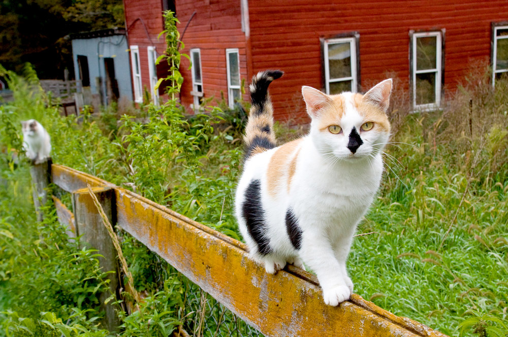 animal photography cat barn