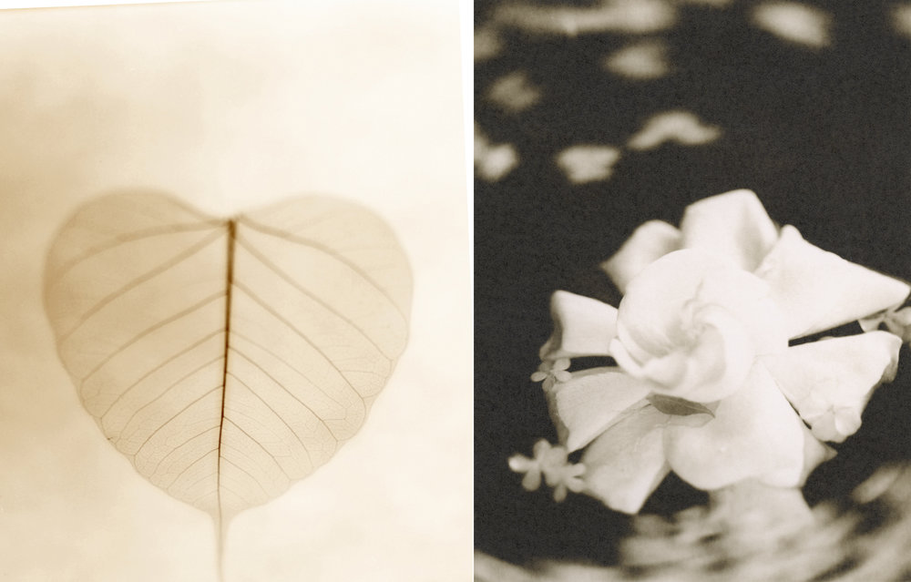 art photography sepia flowers
