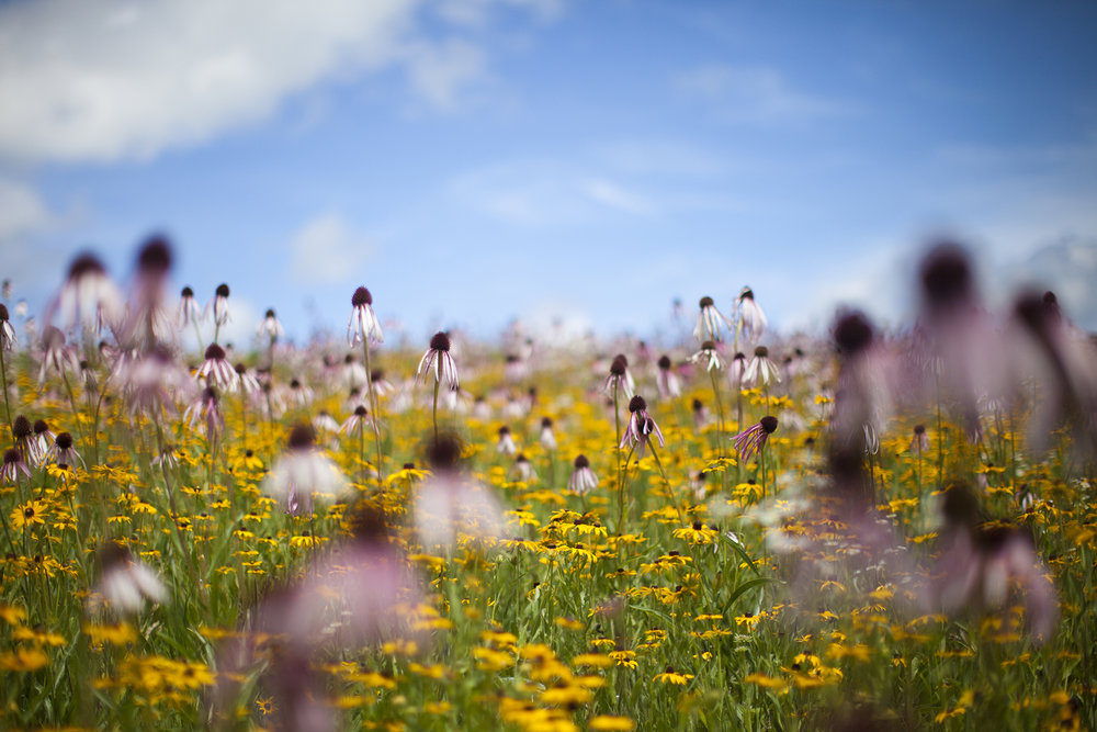 photography of prairie at prairie moon nursery minnesota