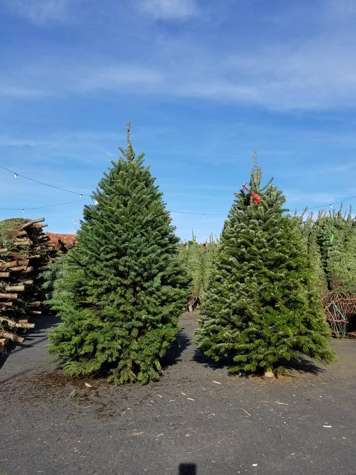 Corrigans, Christmas Tree