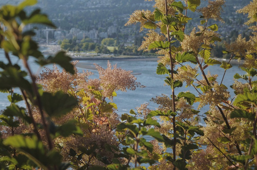Beautiful foliage in from Stanley Park in Vancouver, British Columbia
