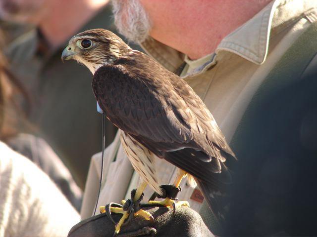 falconer 14 copy.jpg