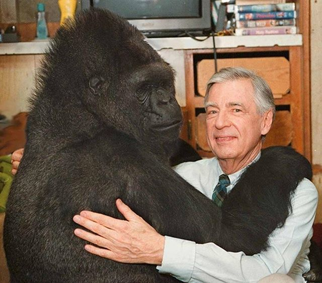 My mom taught me who Koko was. I remember, though I don't recall my age, watching her interactions with Mr. Rogers. I've known about this video for, what seems like, my whole life. I revisit it when I'm down, I revisit it when I'm happy, and I revisit it when I find out people haven't seen it. Koko was special and taught us so much. She taught us that animals other than humans are capable of in more depth emotions than we thought. She showed us she felt deep love. She felt excitement when meeting people she was fans of. When she learned about her kitten escaping and passing away, she cried. When she met Robin Williams she laughed. If you know me, I love animals... probably more than humans. I don't usually do these posts about celebrities passing, but this one stung. So I share with you a picture of two beings and two energies that made the world a little brighter. This is one of my happy places. Thank you for everything Koko, rest easy. Though you're no longer with us physically, everything you did has changed the world forever.