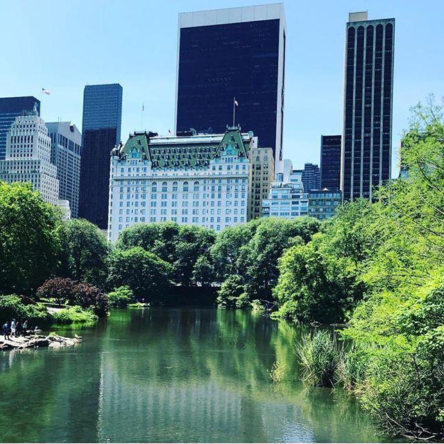 Central Park in the summer #modeculturemagazine #digitalmagazine
