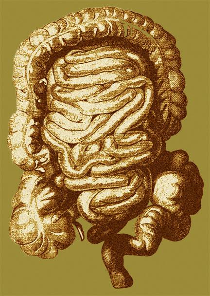 digestive+system+R2.jpg