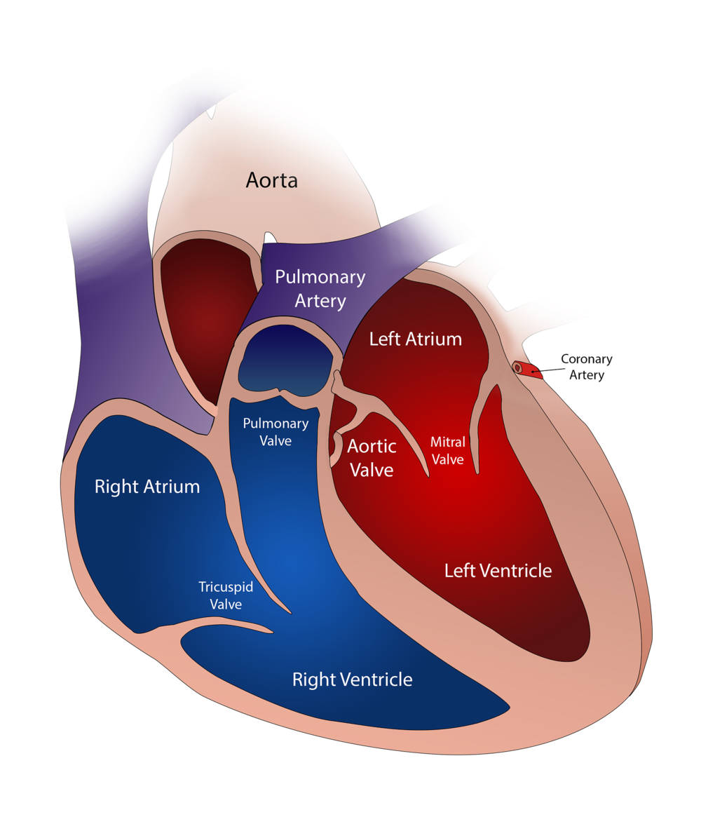 heart-2222964_1920.png