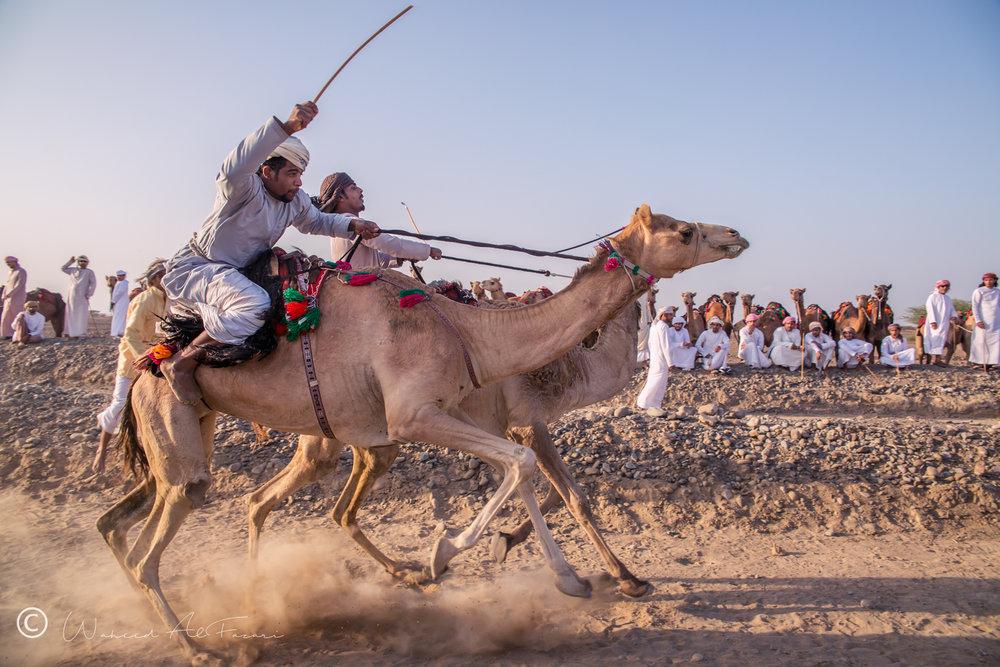 Camel Race | Oman