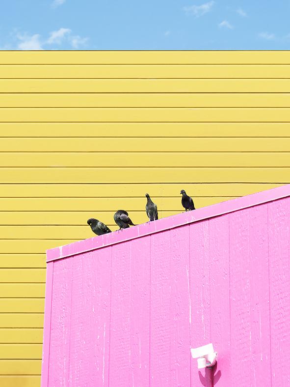 pink wall2.jpg