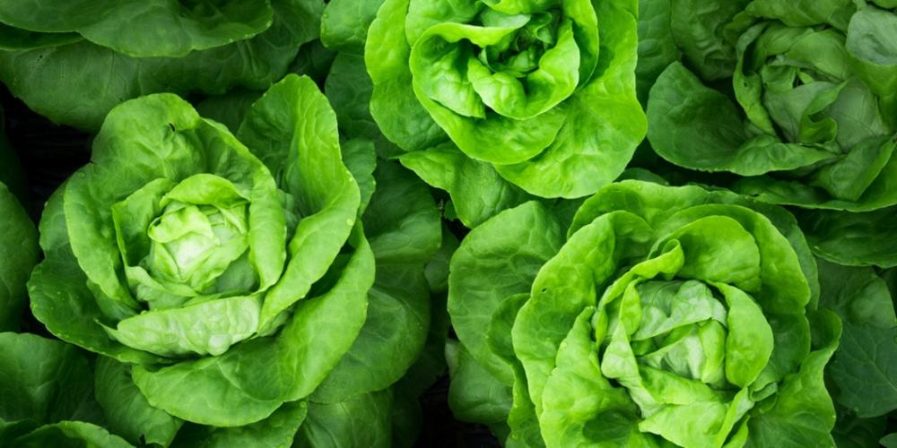 Vegan-vegetarian-plant based-weight loss-Boston- life coach