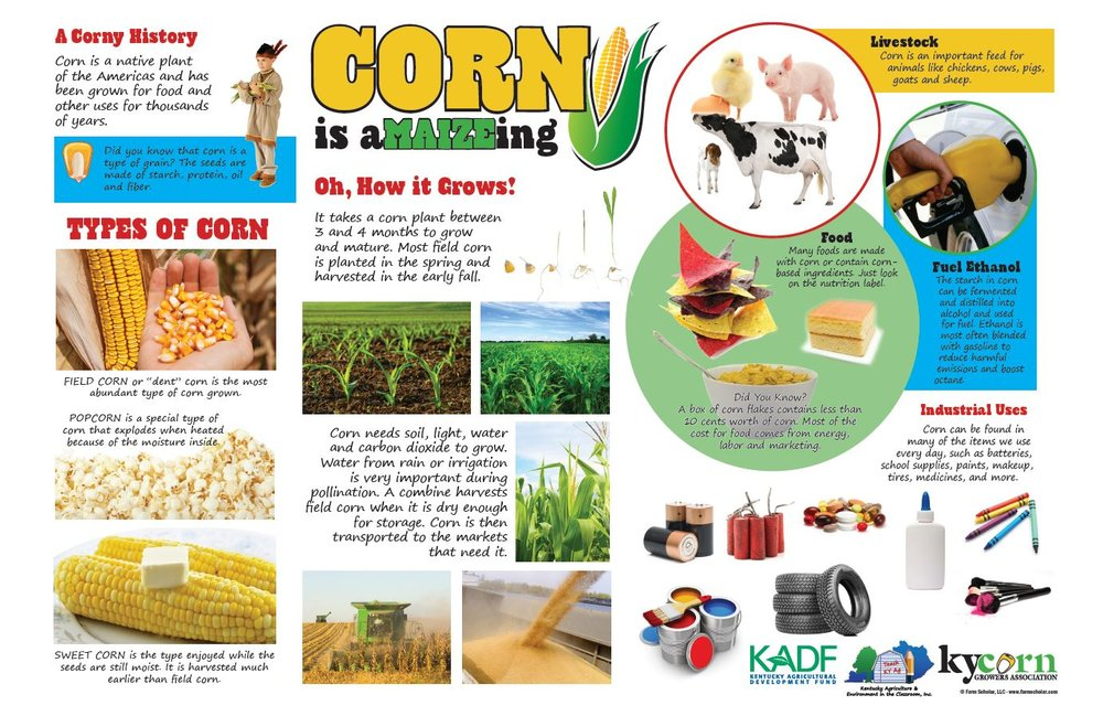 This poster was created to help volunteer educators and teachers tell the story of American corn. If you are interested in this resource, please contact us.