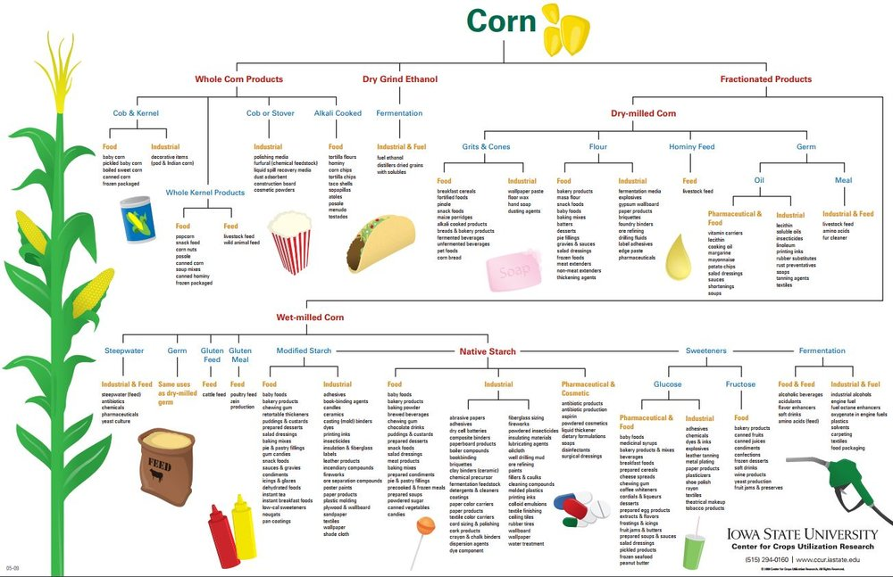 corn uses poster.JPG