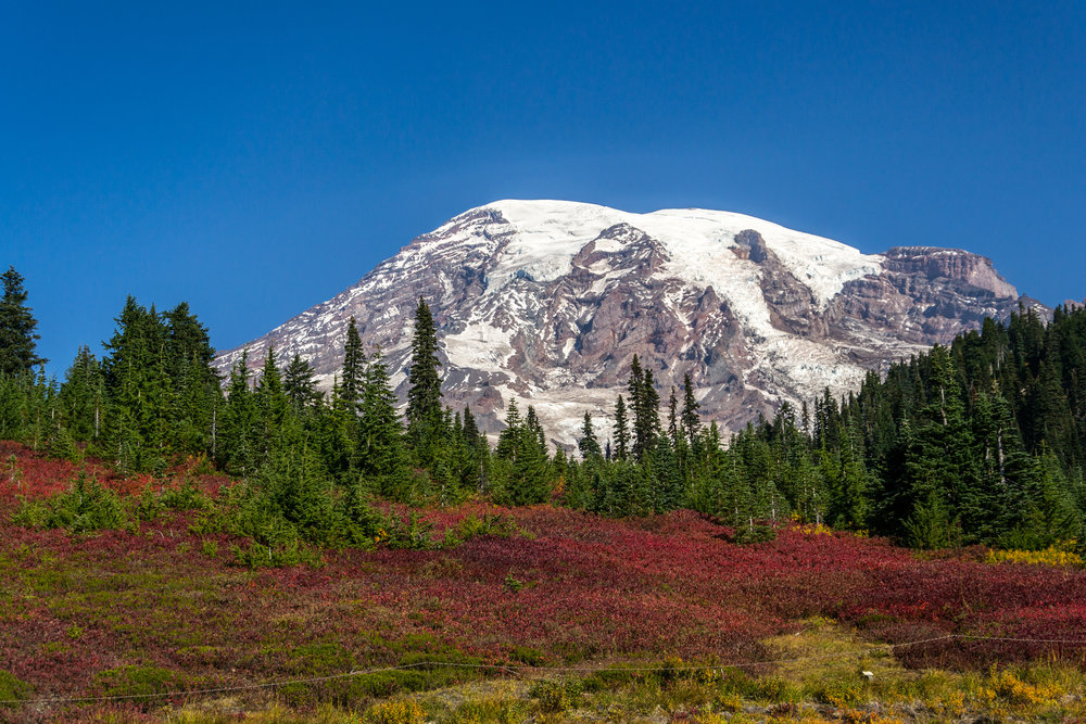 Mount Rainier Premium Small Group Tour - Full Day All Inclusive Tour, Nature Walks, Gourmet Lunch