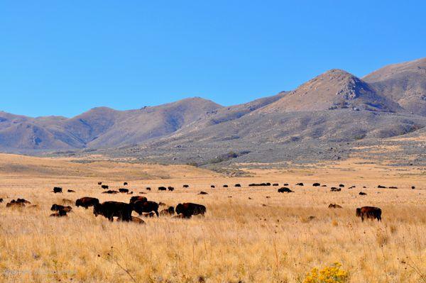 Antelope-Island-Limousine-Rental-Services-Utah.jpg