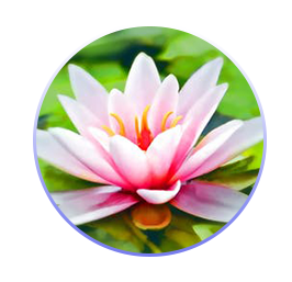 BLOG   I love to share my thoughts on how people can heal and some of the ways they do it. Sign up to my blog to hear what's new in the world of holistic therapy and how if we change our thoughts we can change our lives.