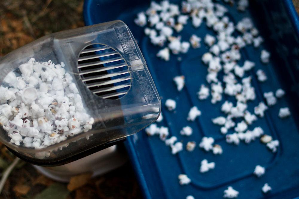 Popcorn-Sorting-25.jpg