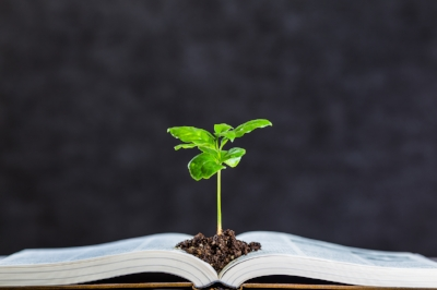 Books-and-plant-611318356_1258x838.jpeg