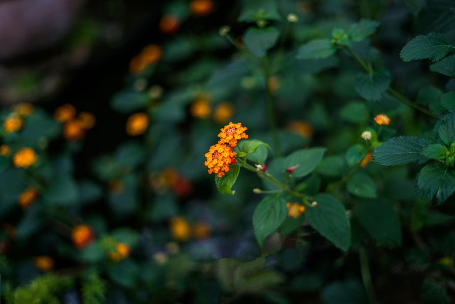 delicate-orange-flowers_925x.jpg