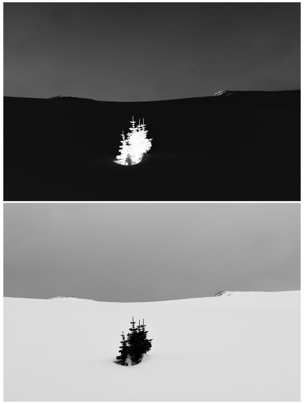 inversions 4 - minimal tree.jpg