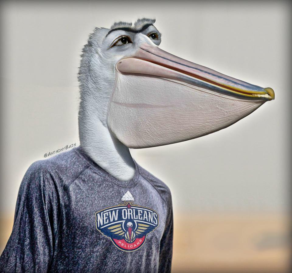 Pelican Davis