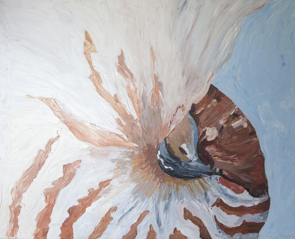 nautilus-shell-exposed-open-studio.jpg