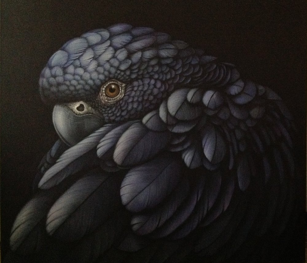S.Hood-22glossy-Black-Cockatoo22-Acrylic-100cmx90cm.jpg
