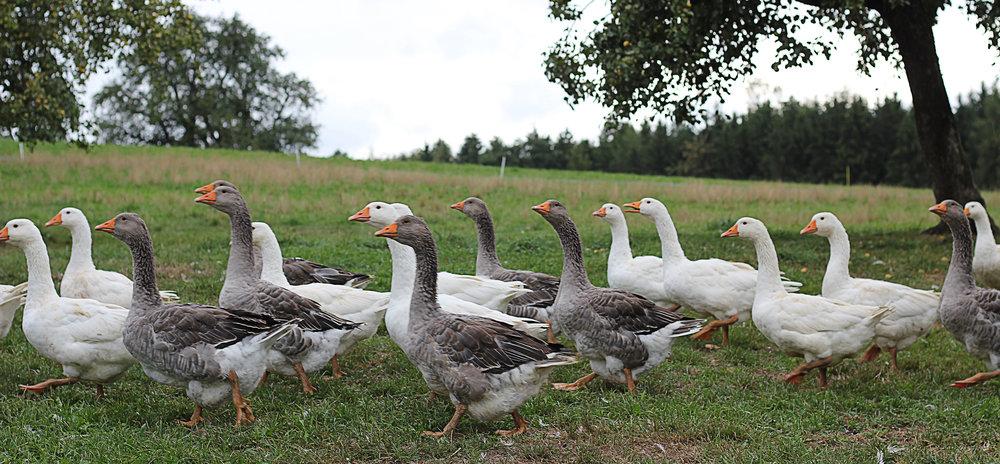 Luzern isst -Farm Table - Weidefarm