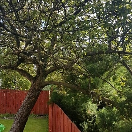 Tree Surgery - Domestic & Commercial