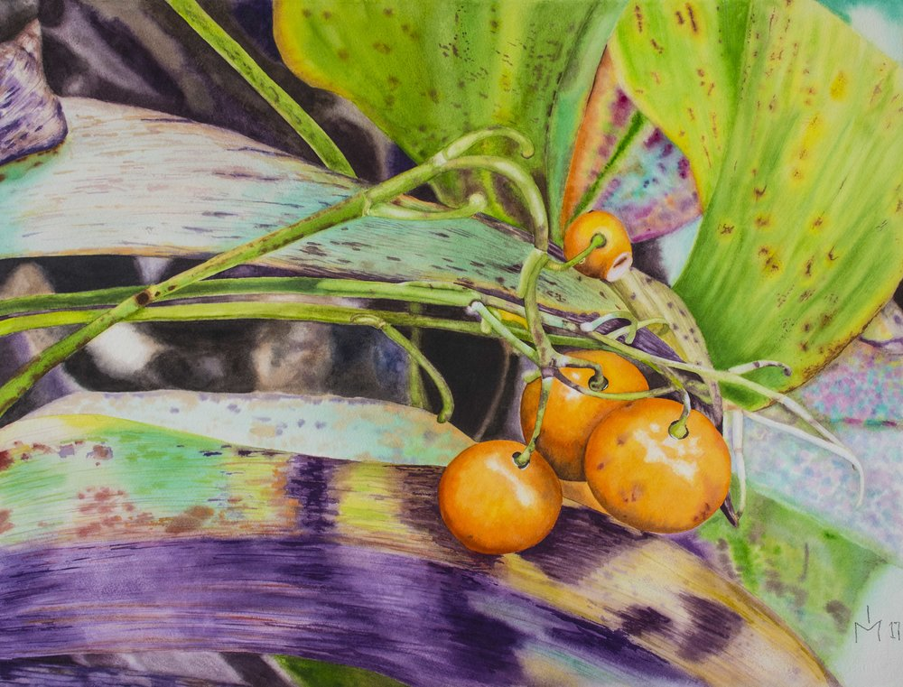 Eduvigis (Inma) Medina, Lily of the vally berries, Watercolor on paper, W73 X H57,  http://www.inmamedina.com