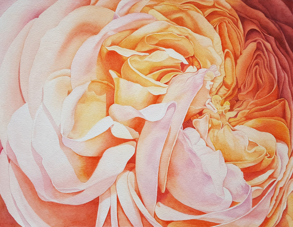 YAN JI, Autumn Rose, watercolor on cold press watercolor paper, 10inch X13inch (25cm X 33 cm)