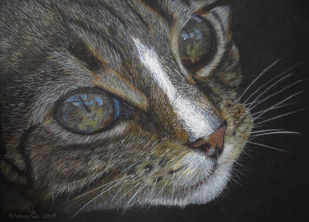 Karen Hunt, Karen Hunt - Cats Eyes, Pencil on paper, 23cm x 30cm