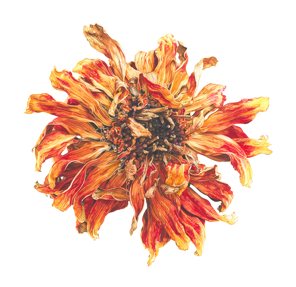 Elizabeth Hellman, Lion flower, Watercolour on paper, 54 x 54 x 1.5,  http://www.elizabethhellman.co.uk