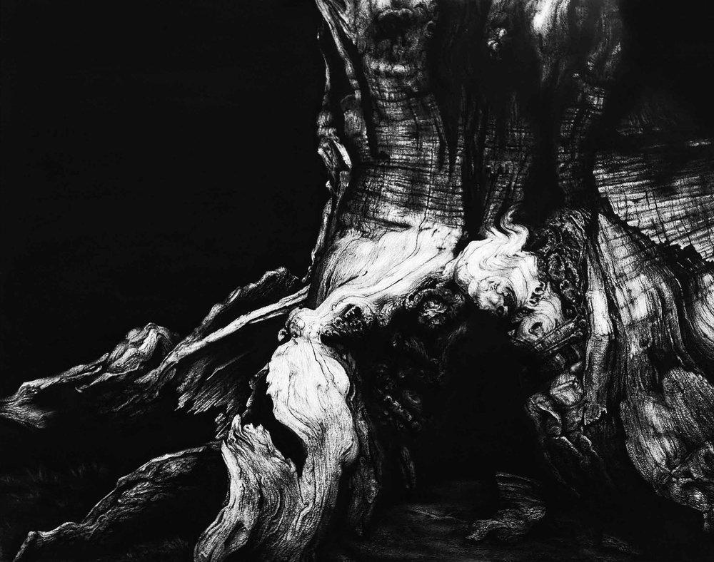 Blaze Cyan, Windsor Great Park II, Charcoal and Conte on Paper, 49cm x 60cm (image unframed) 66cm x 77cm x 2cm (framed),  https://www.blazecyan.com