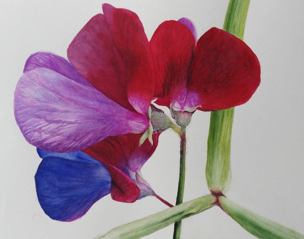 Burnell McKenna  Joy of the Garden  Watercolour on paper, 28 x 38 cm